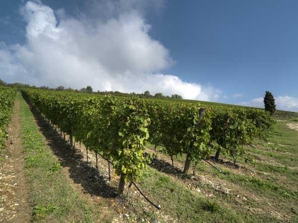 Programma nazionale di sostegno vitivinicolo