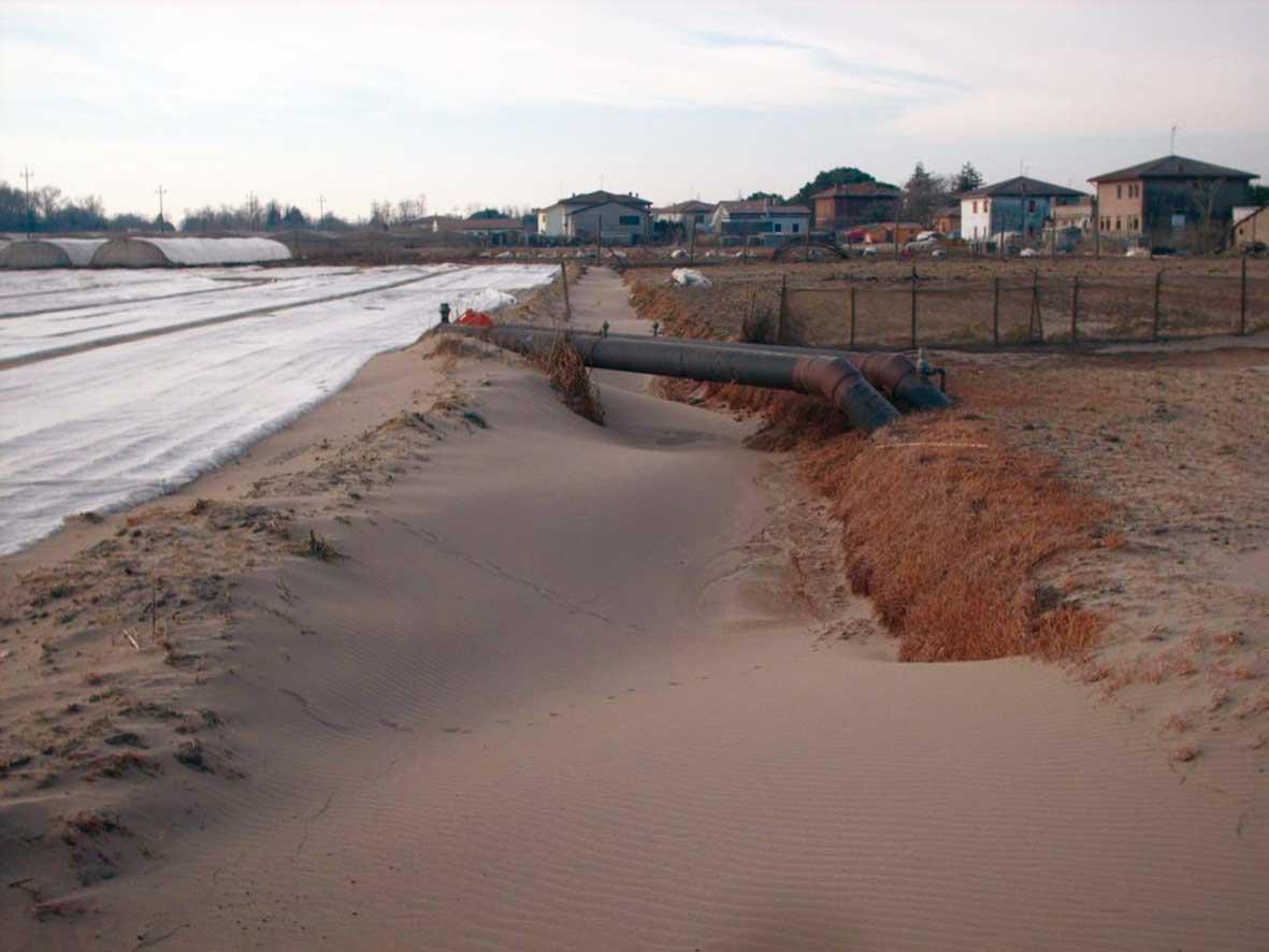 coldiretti rosolina sabbia in campi 1 1