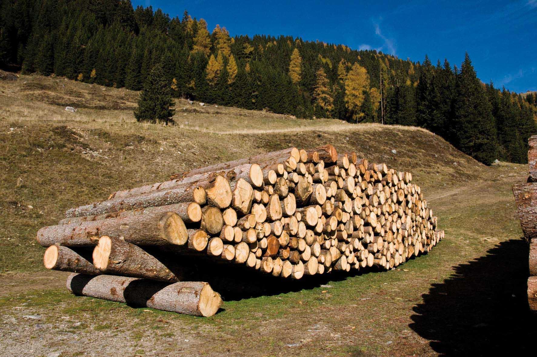 legno Lagorai val campelle novembre 2009 tronchi tagliati 1