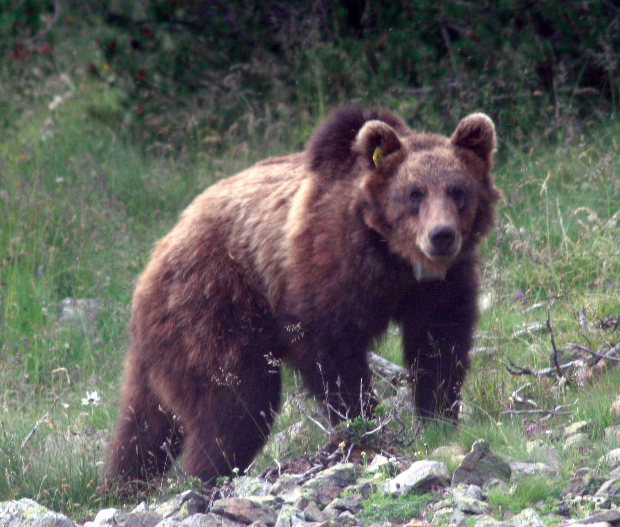 PAB orso m13 1