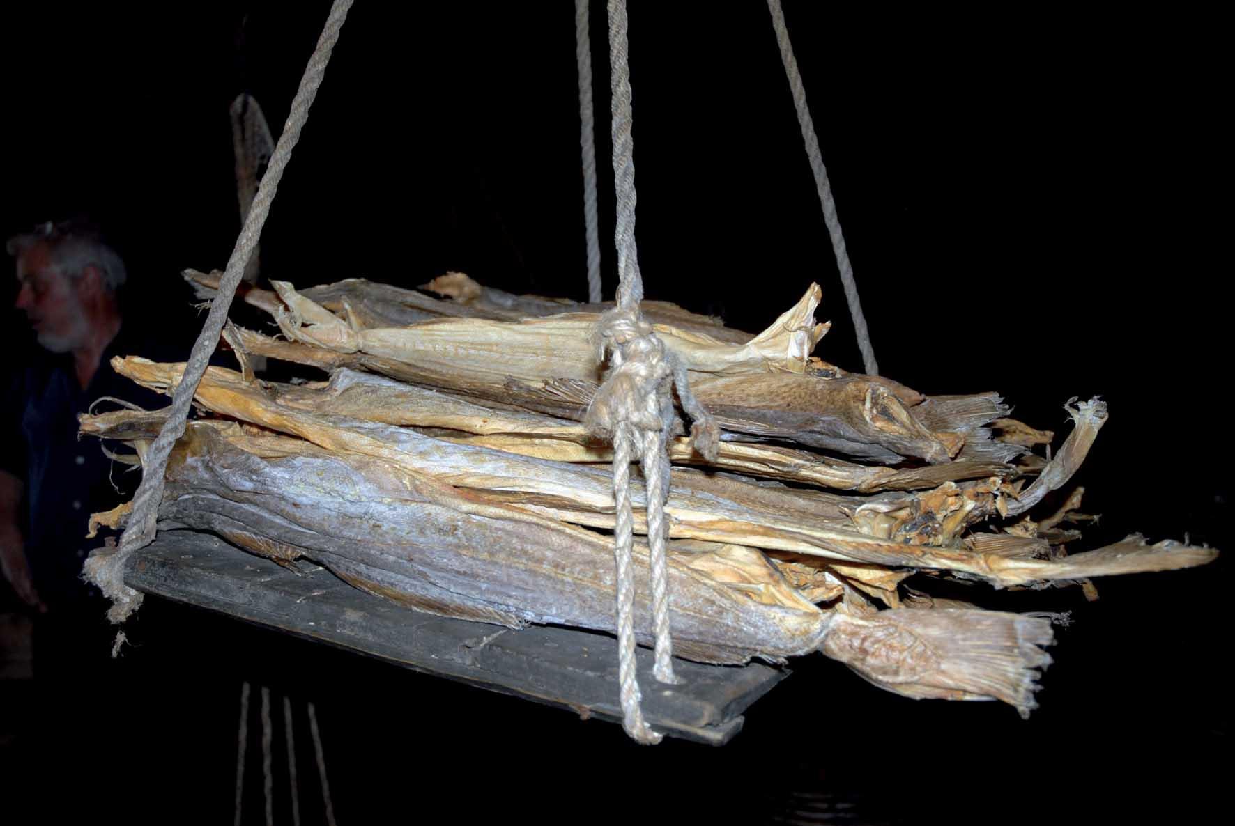 confraternita del baccala catasta baccala essiccato 1
