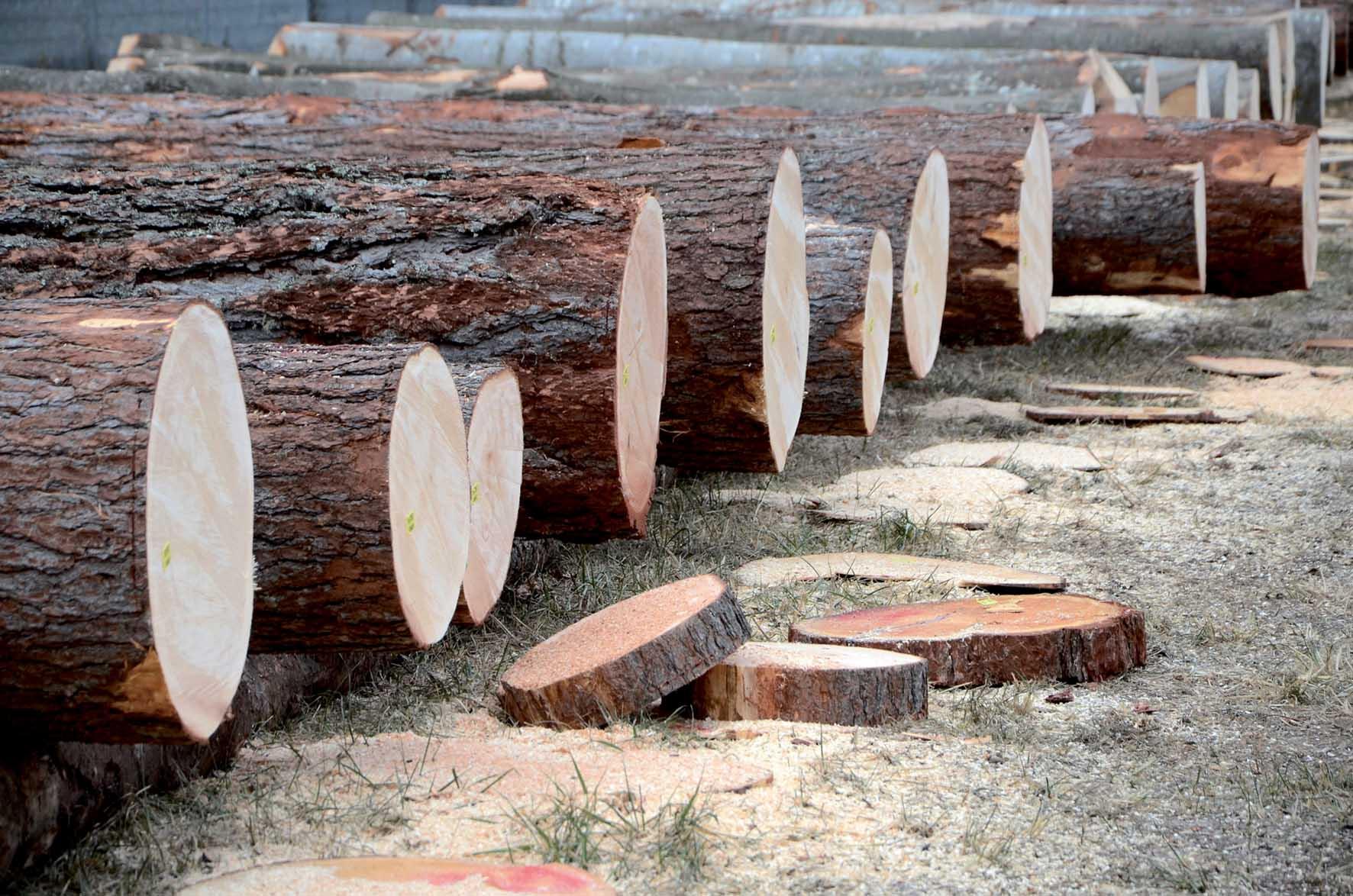 assolegno legno trentino tronchi pregio asta 1