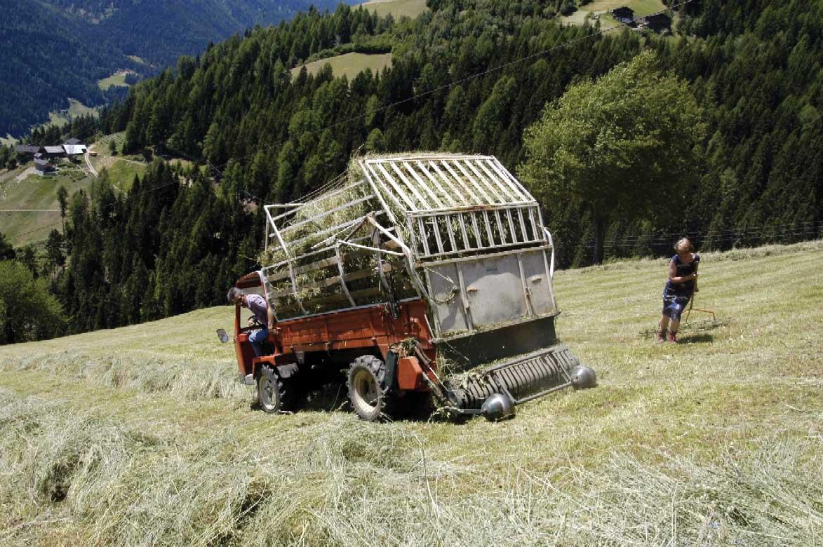 PAB-fienagione-montagna-contadini-ilnordest