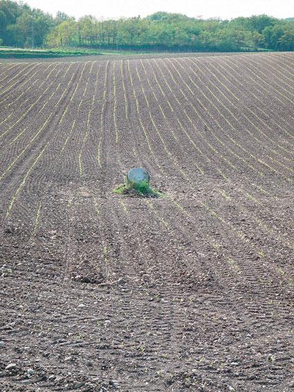 AgricolturaPiantineCrescita 2