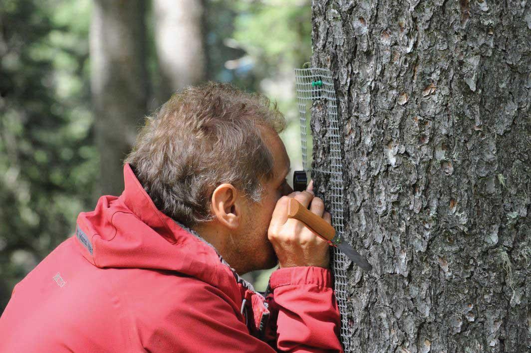 PAB-Analisi-di-licheni-su-un-tronco-ilnordest