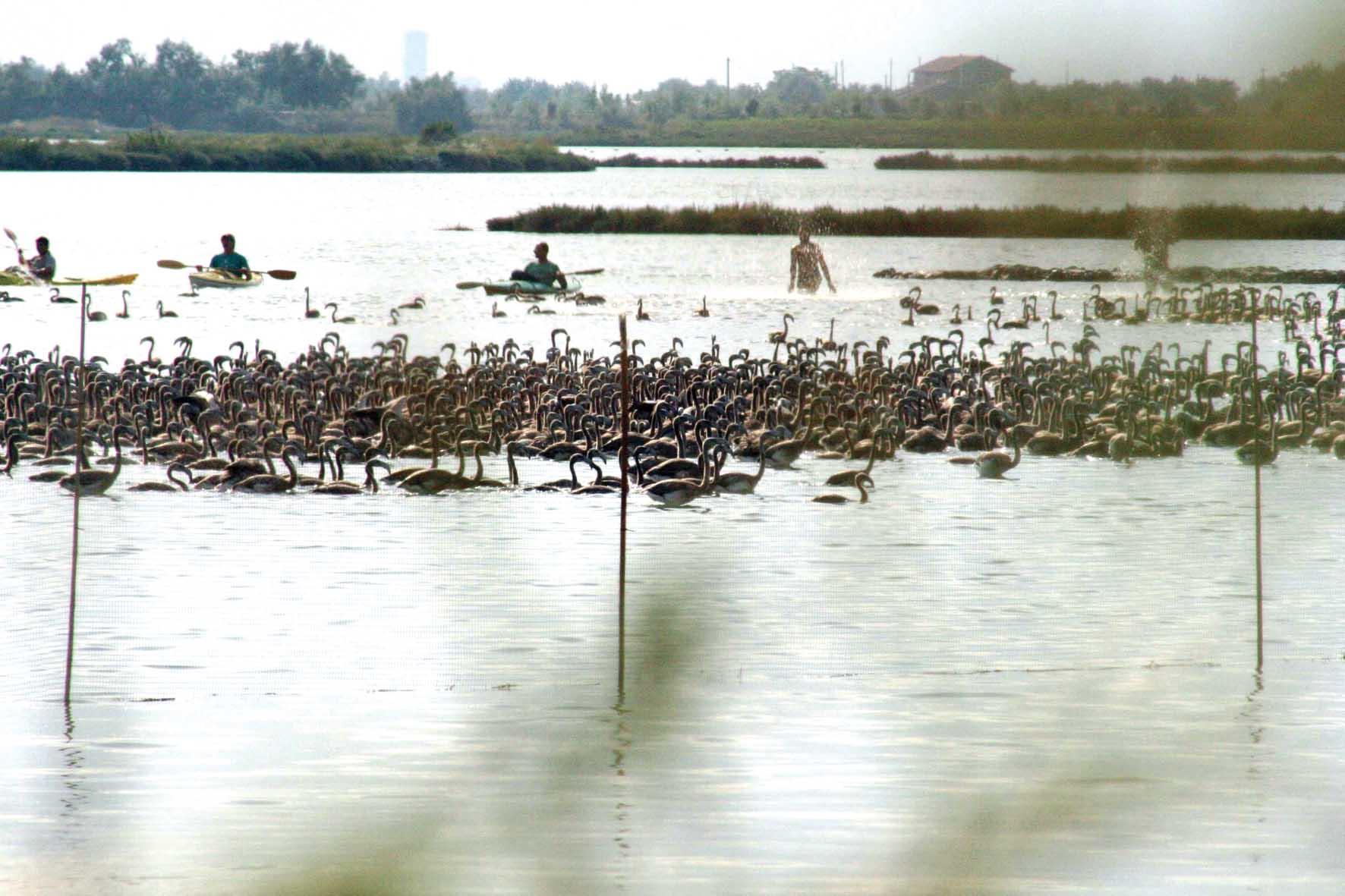 laguna venezia fenicotteri 1