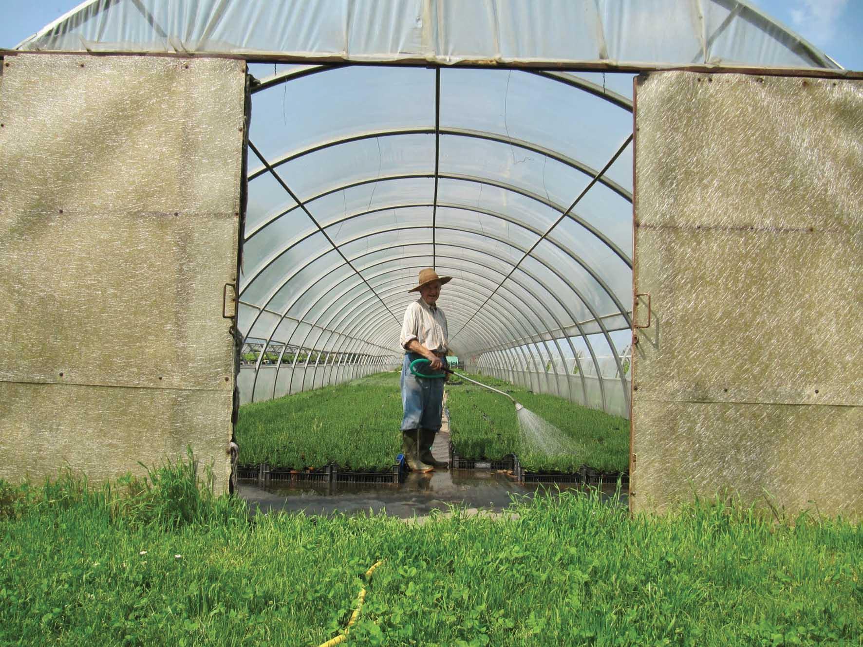 produzione agricola agricoltura agricoltore serra annaffiamento 1