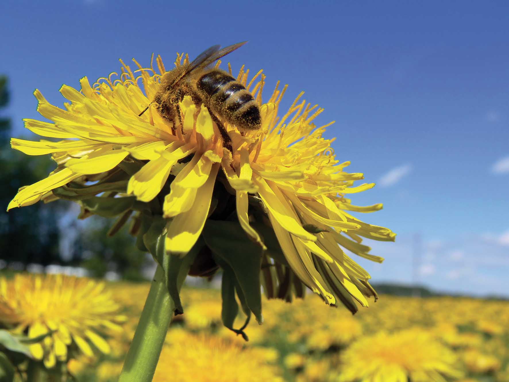 apicoltura difesa delle api