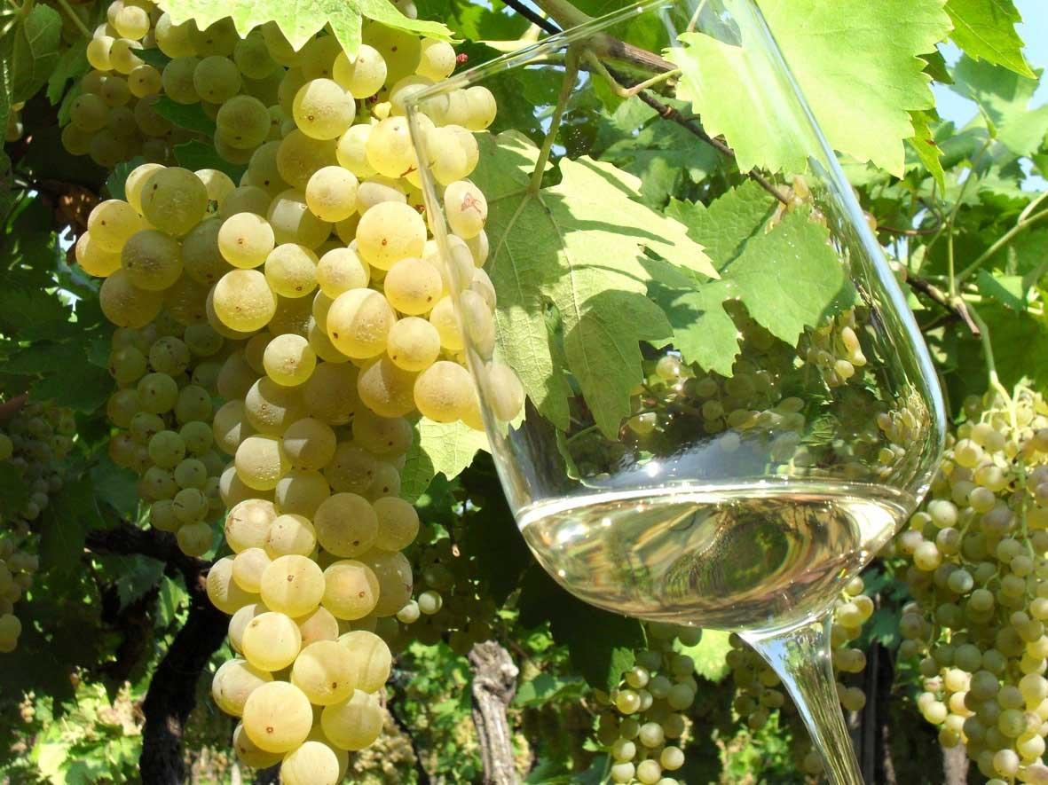 Coronavirus e il vino Strada Vino Soave Garganega e Soave
