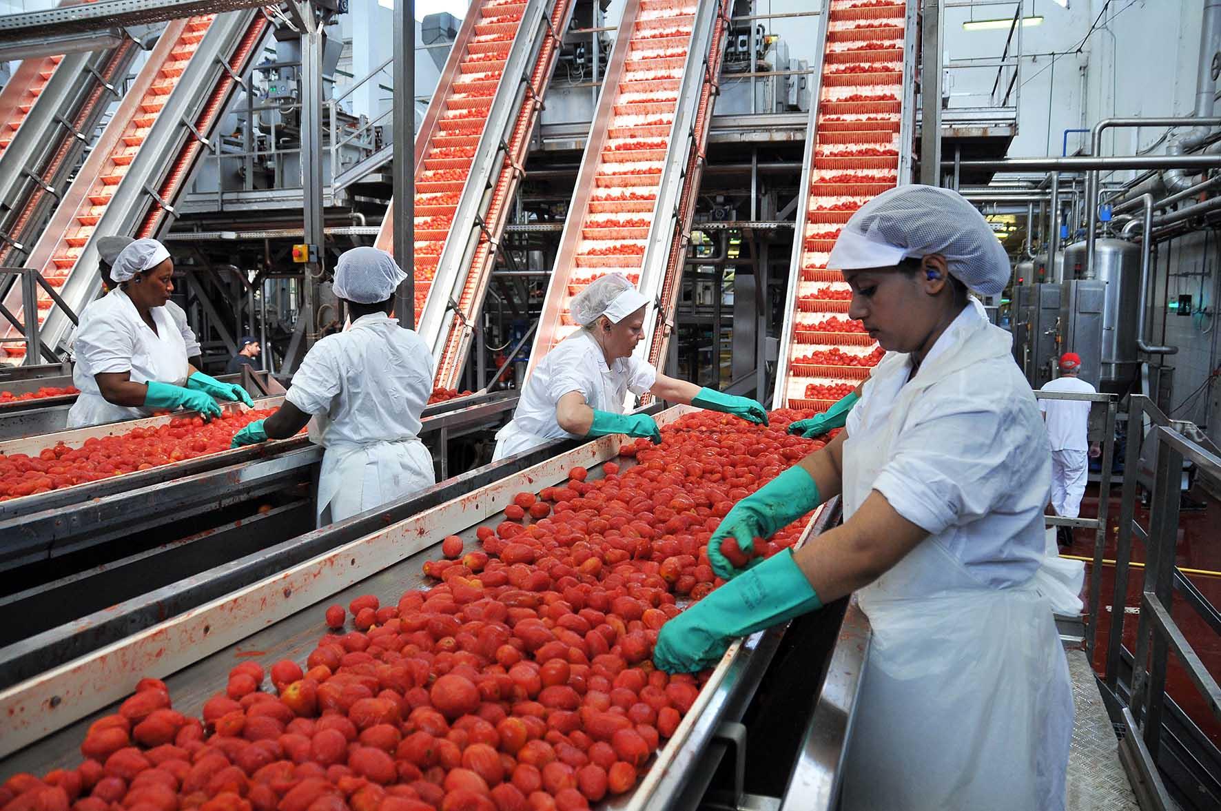 Agricoltura Emilia Romagna industria pomodoro cernitrici