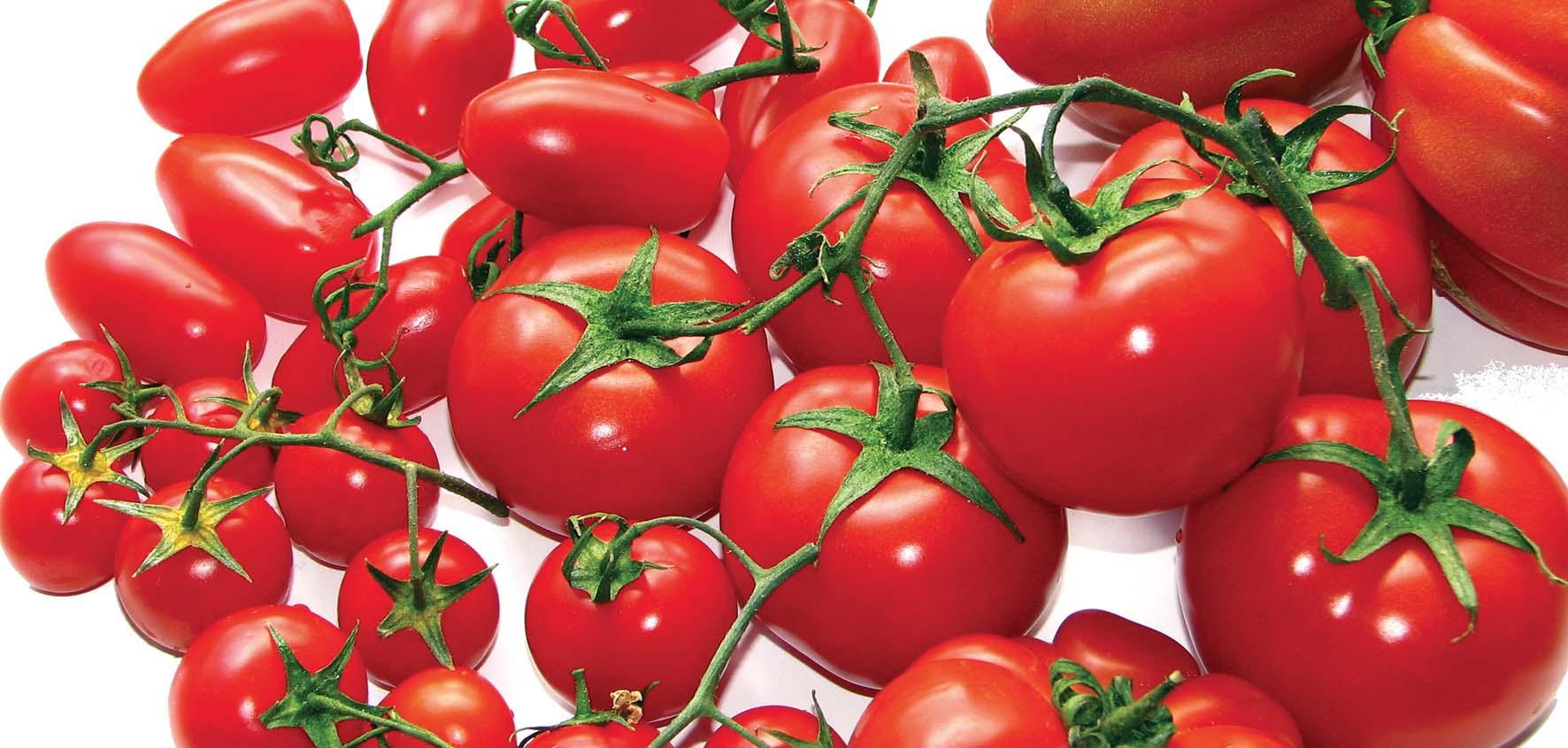 pomodoro Solanum lycopersicum Varietà di pomodori