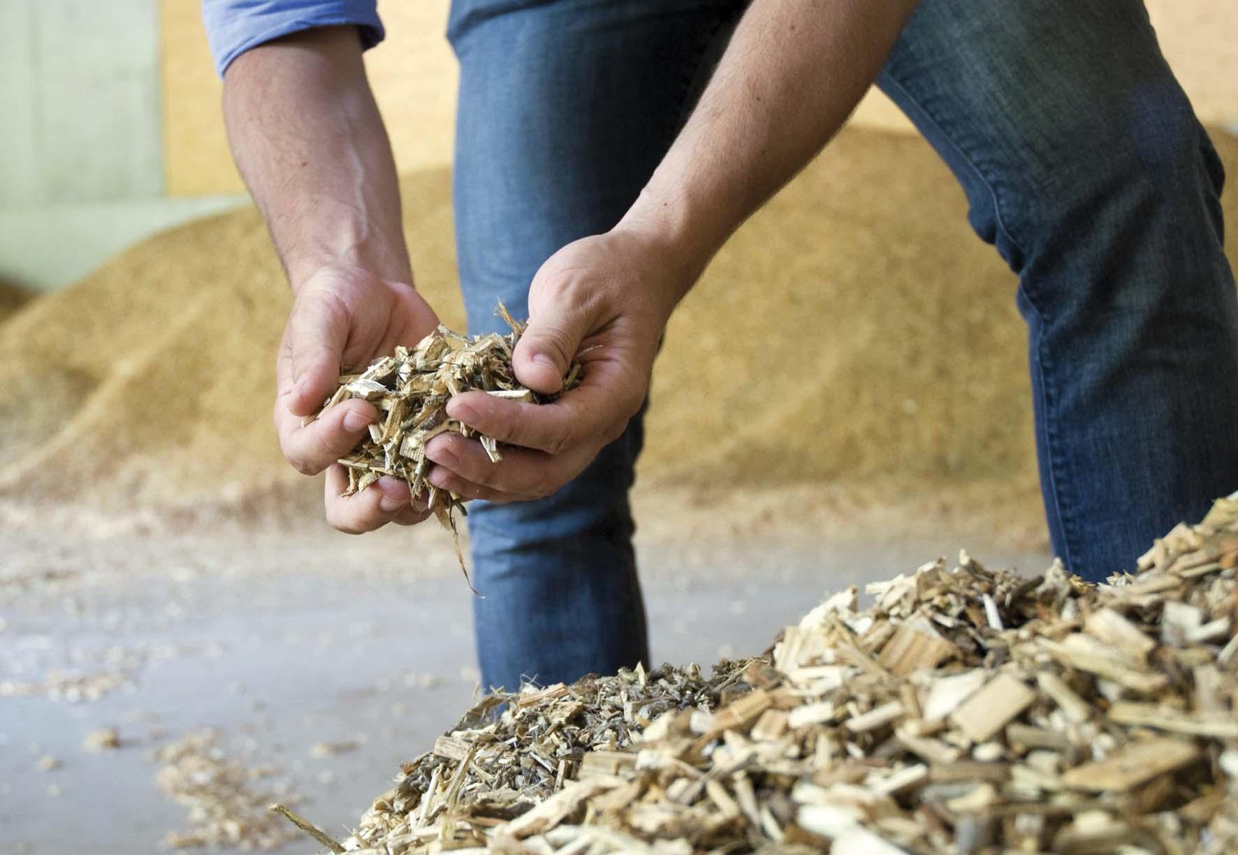 cippato legno biomassa