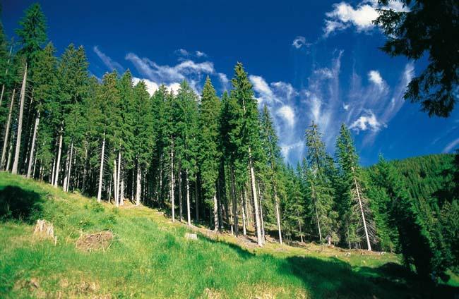 Foresta foreste