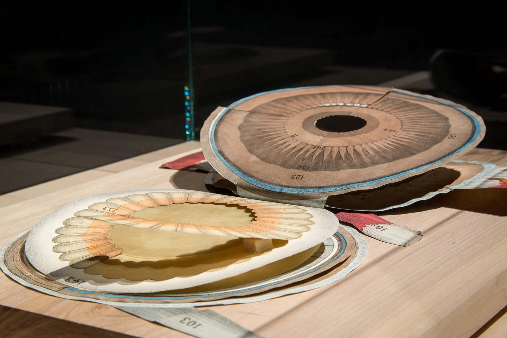 teatro anatomico PD PalazzoBo Witkowsky Atlante a tavole mobili che mostra il meccanismo della visione L occhio 1878 1888 Varie carte 098