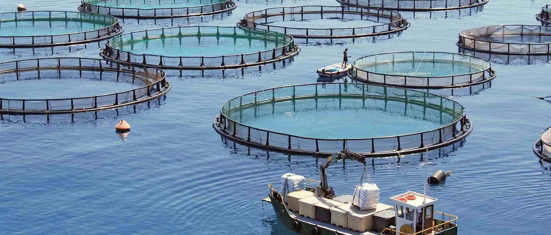 acquafarm itticoltura allevamento