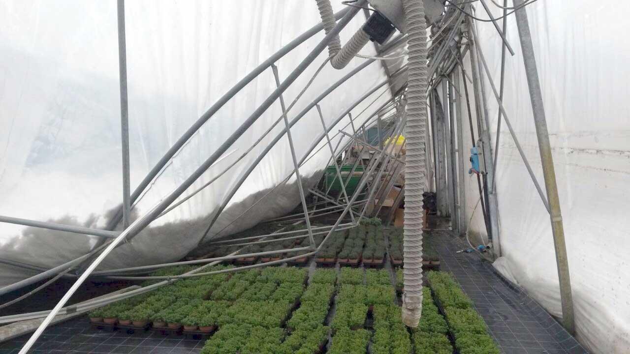 danni maltempo agricoltura neve serra