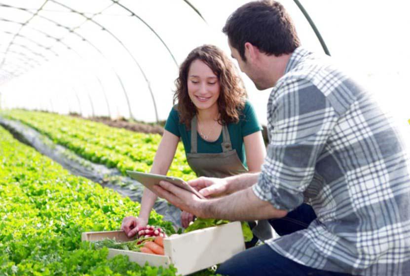 produzione agricola impresa giovani agricoltura