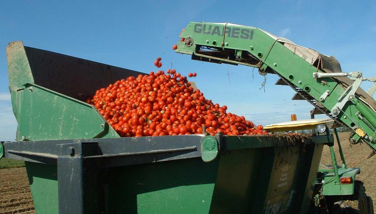pomodoro industria raccolta meccanica