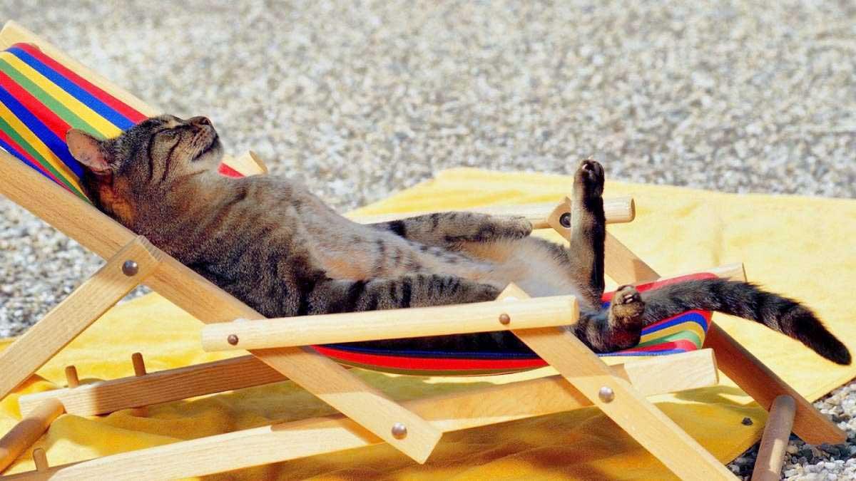 vacanze con animali relax in spiaggia per il gatto