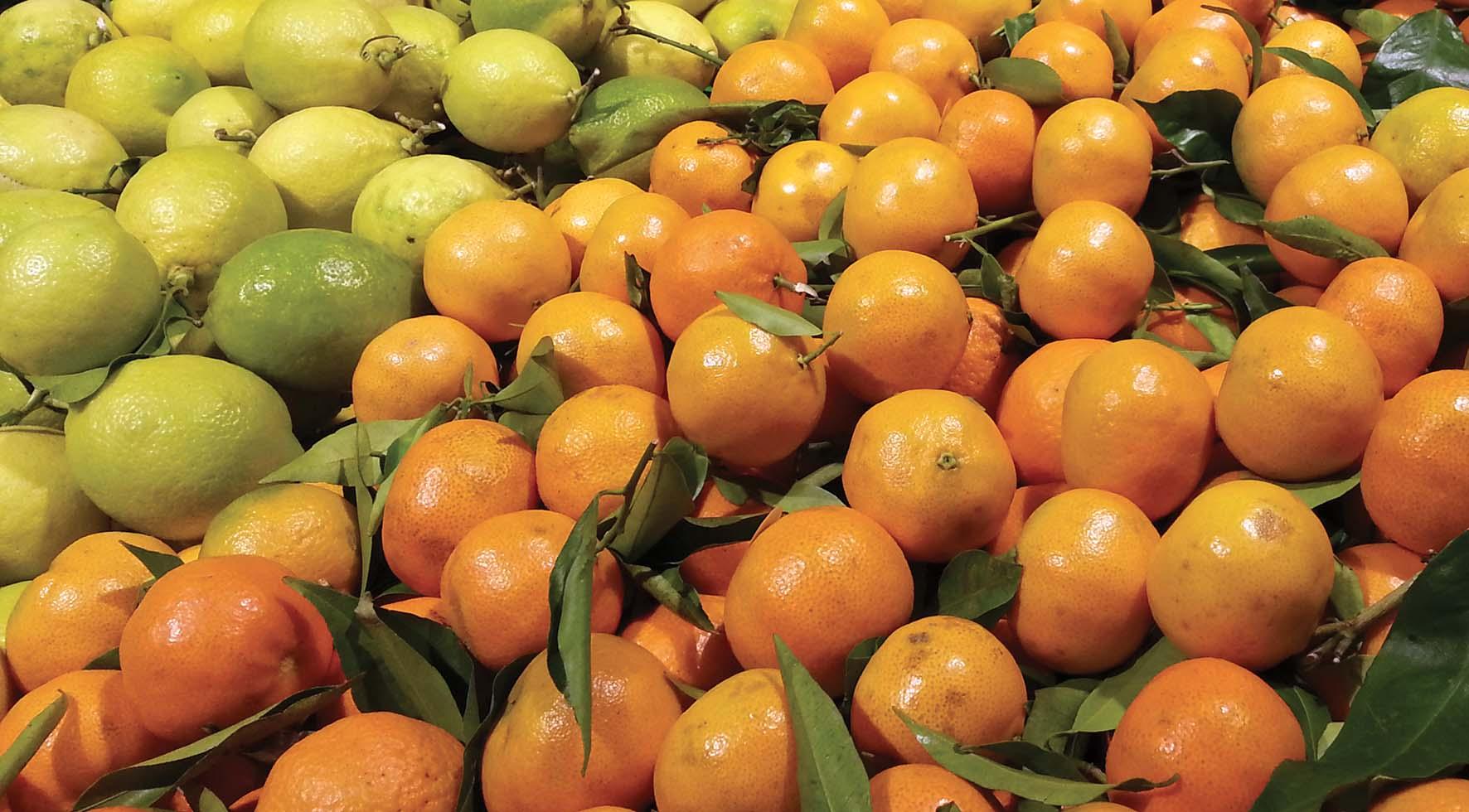 frutta agrumi mandarini limoni