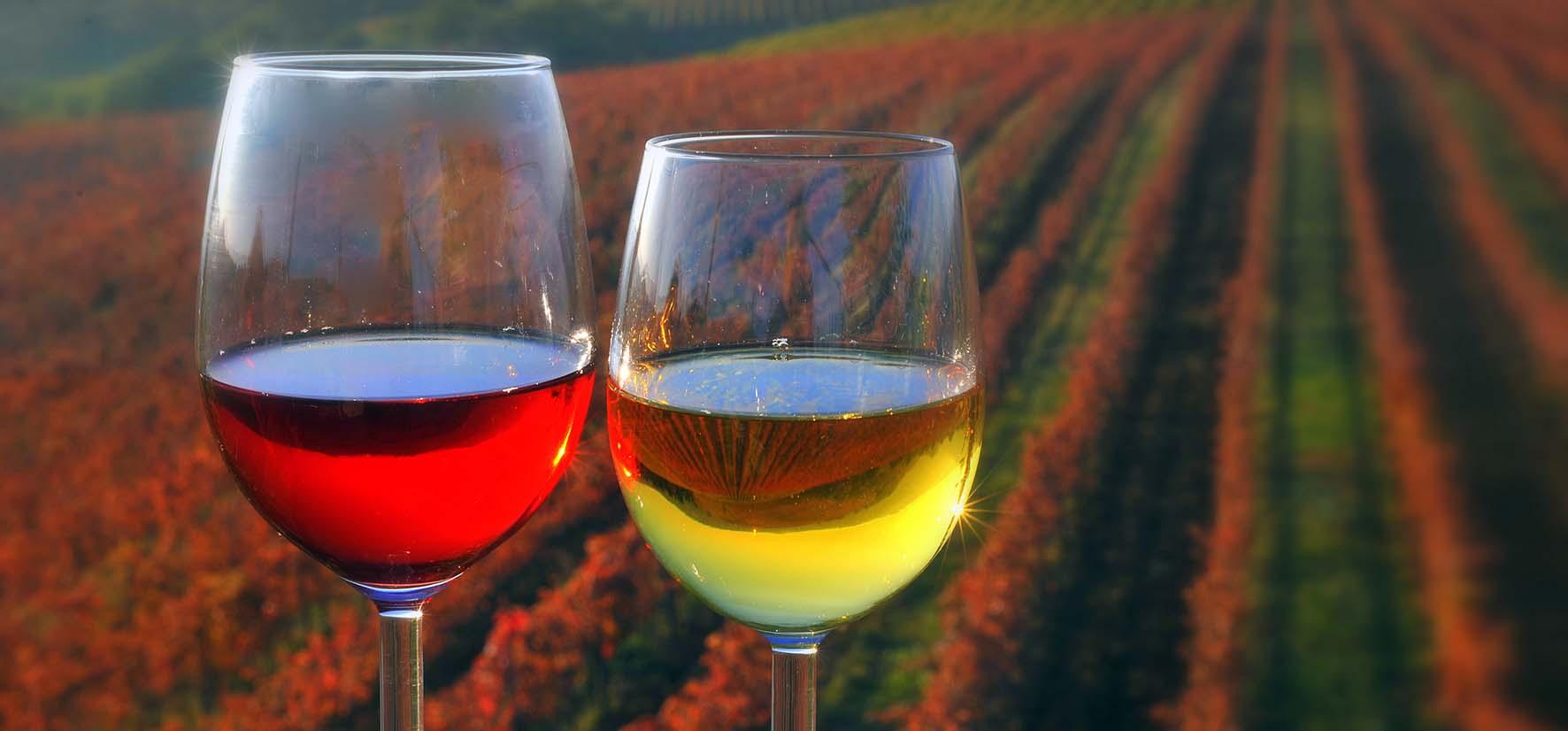 Due bicchieri di vino Archivio STO foto U. Trnkoczy