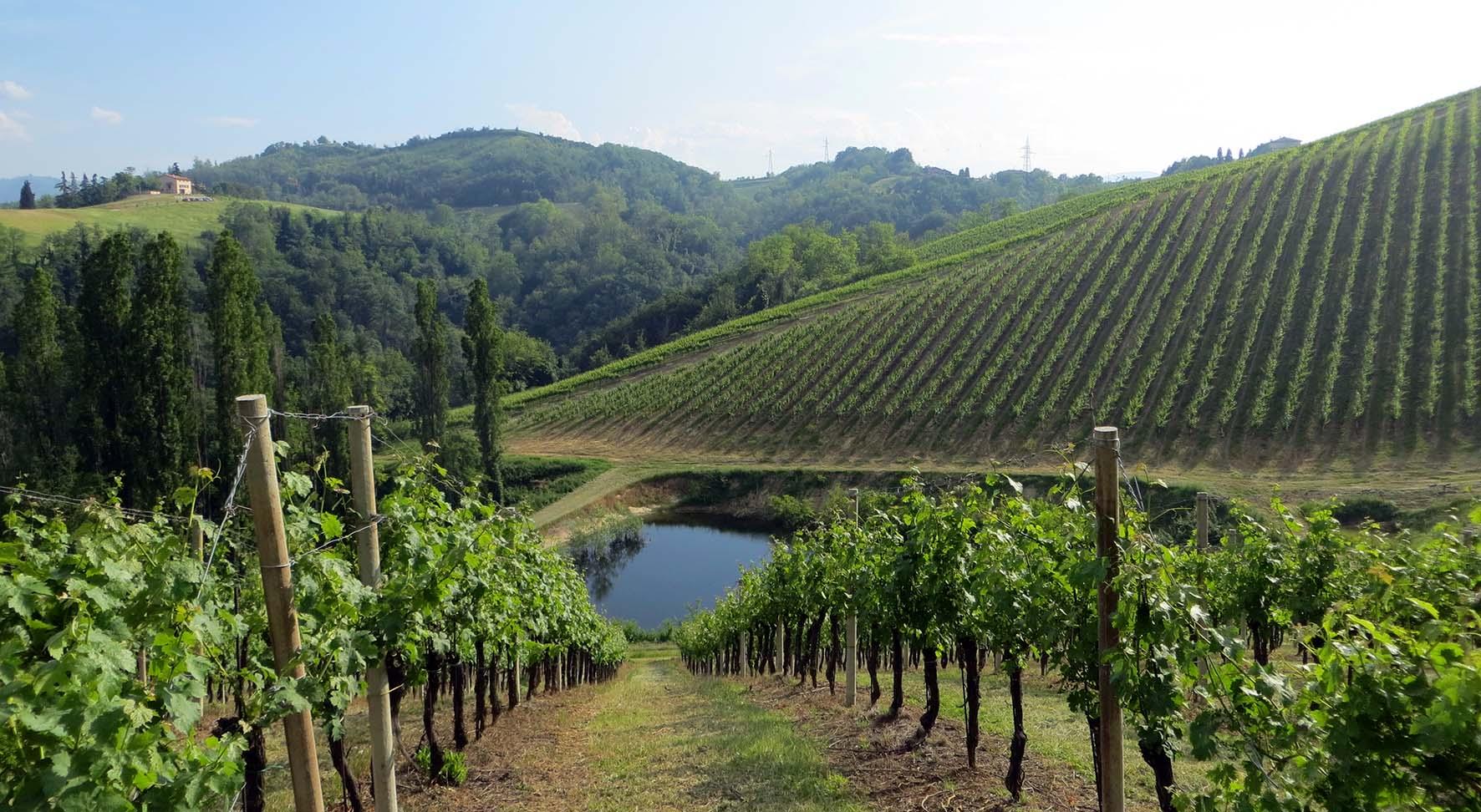 Agricoltura Emilia Romagna vigneti filari
