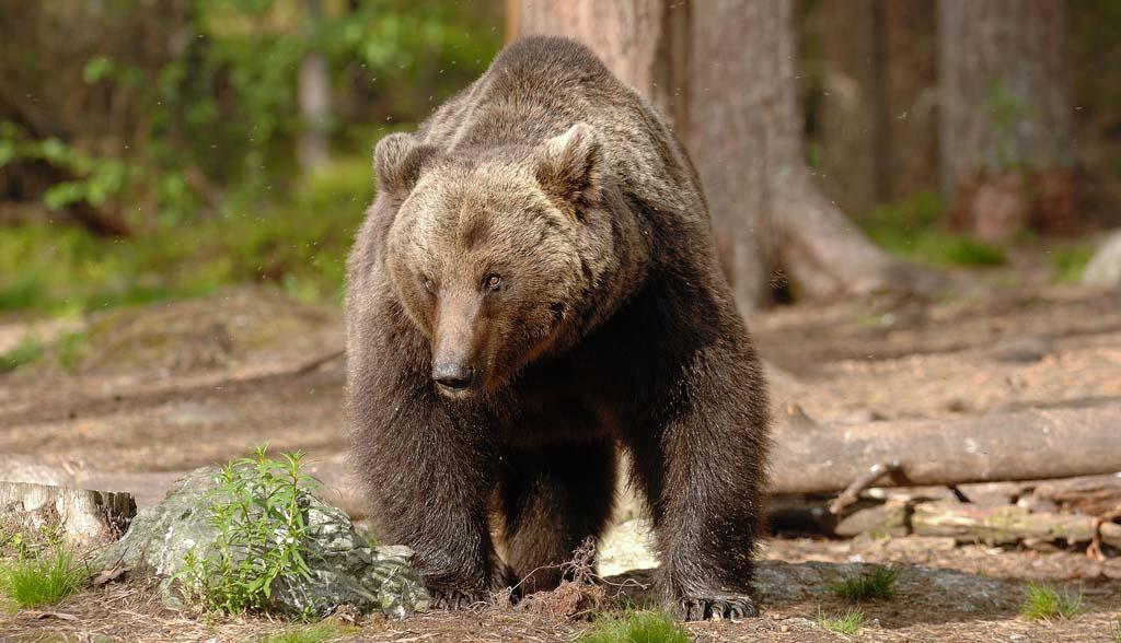 orso bruno cammino