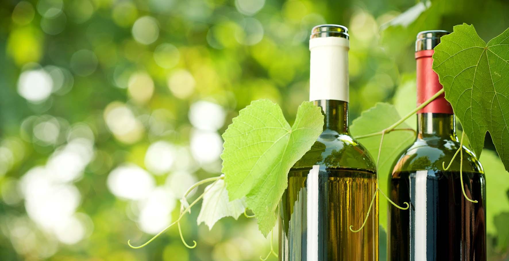 vino bio vigna bottiglie