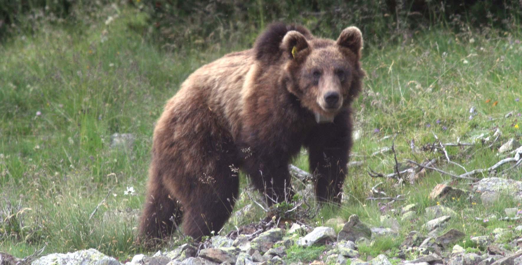 PAB orso m13