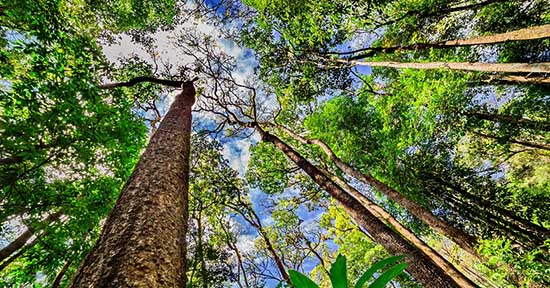 foresta alberi cielo federforeste
