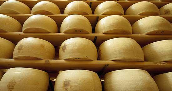 formaggio grana padano in stagionatura