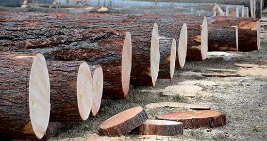 legno trentino tronchi pregio asta