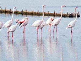 fenicotteri rosa laguna veneziajpg