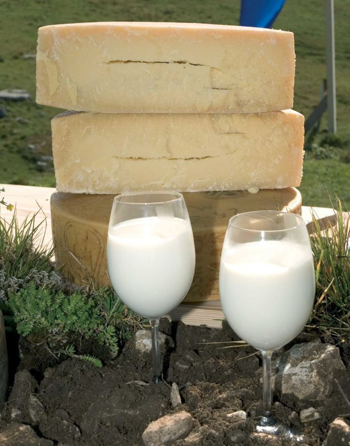 crisi del latte assolatte