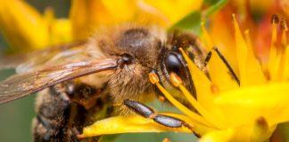 giornata mondiale api