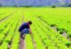 agricoltura basso impatto ambientale