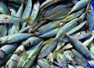 prodotti ittici pesce lavorato