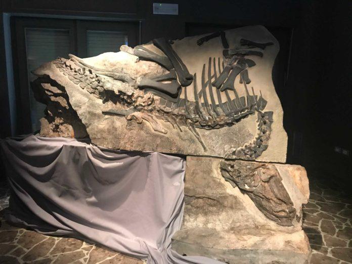 dinosauro bruno