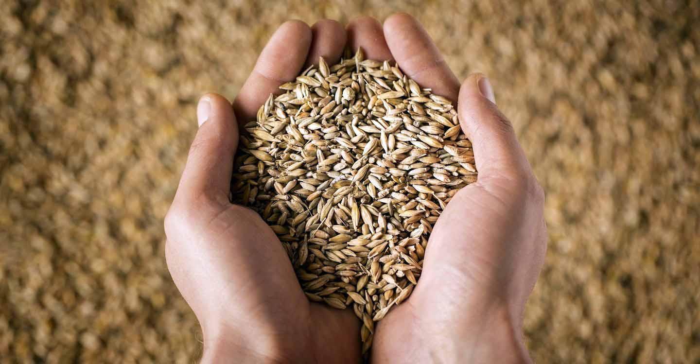 Quintuplica la produzione di pasta con base i grani antichi italiani ... f7dc87e8a1cd