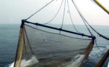 gestione della pesca sostegno per le imprese ittiche
