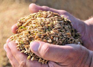 blocco dell'import agevolato di riso