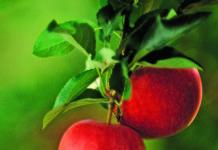 prognosfruit