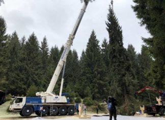 albero di Natale del Vaticano