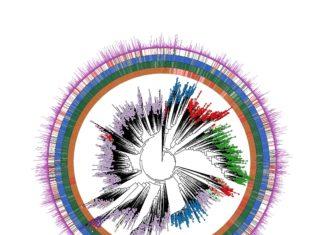 microbio umano