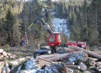alberi schiantati