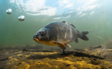 Pesca sul lago di Garda