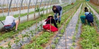 emergenza occupazione nel comparto agricolo