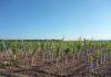 misure per sostenere l'agricoltura
